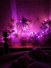 purple lights placed on the plants add color and brign magic to your bedroom