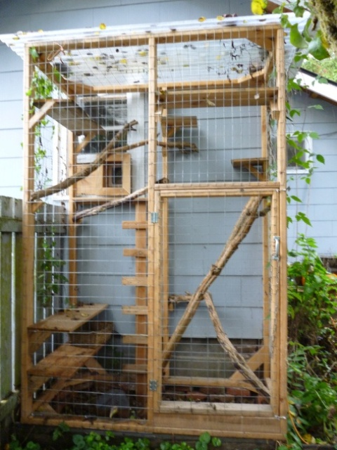 a small yet functional cat patio with branches, shelves and cat trees plus an entrance from the house directly