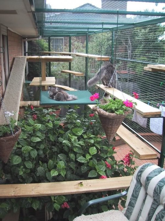 a natural oversized cat patio with lots of greenery and bright blooms, cat trees and shelves for cats to stay on them