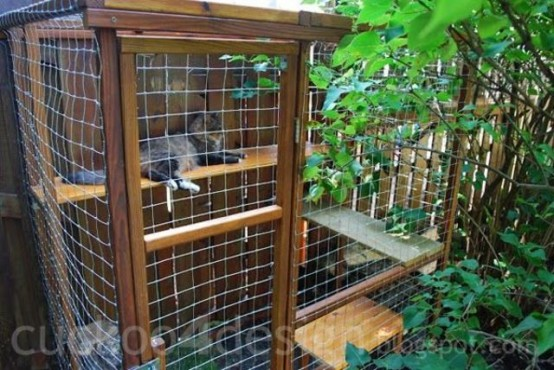 a small outdoor cat enclosure with shelves and natural greenery is a nice space for cats