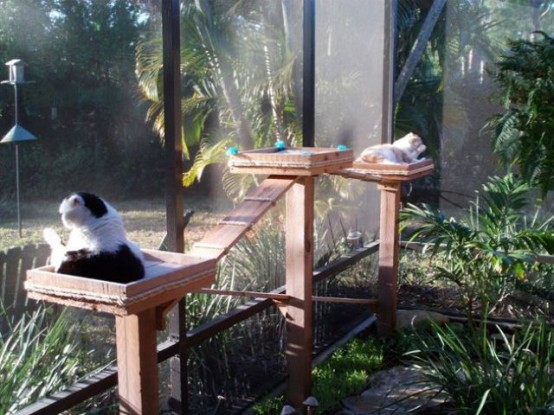 a welcoming natural catio with greenery and cat trees is a cool space to spend some time and enjoy fresh air