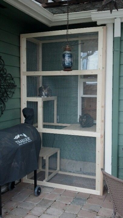 a small catio of wood and mesh, with several shelves at different levels is a cool idea, the entrance is from the house