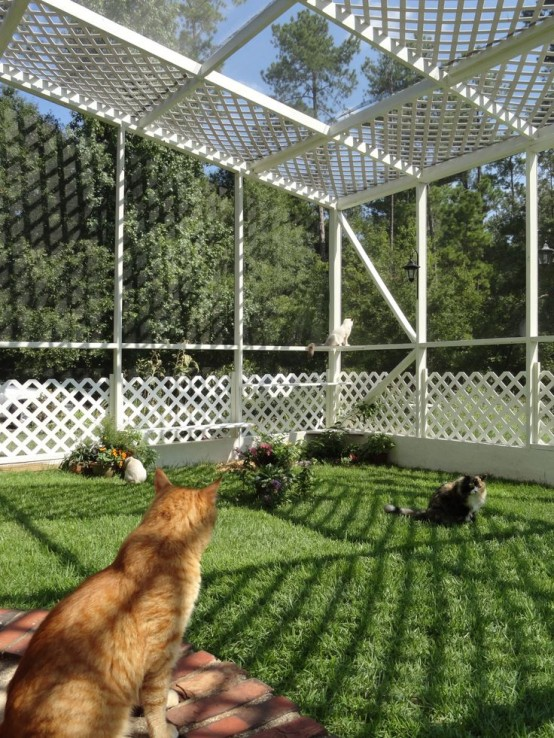 a large cat patio with a green lawn, blooms and greenery planted, cat trees and beds at various levels