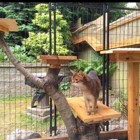 a cage-like cat patio with a large cat tree built of branches and shelves at various levels is a creative and cool idea