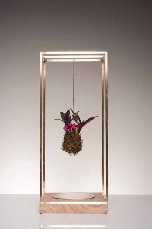 Sculptural Plant Bondage To Bring Nature Inside