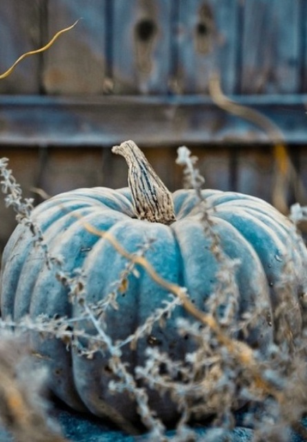 a pumpkin painted blue will be a nice and non-typical decoration for fall and Thanksgiving