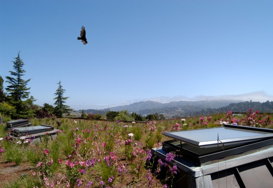 Mill Valley Bird Over Roof