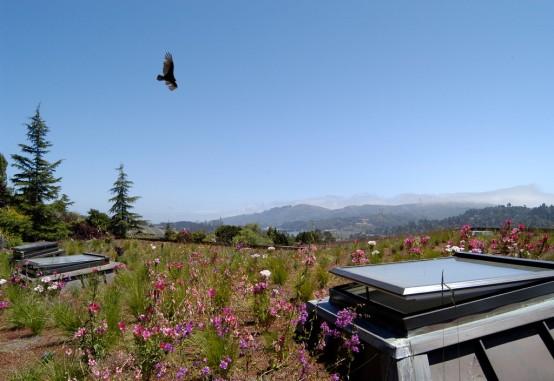 Mill Valley Bird Over Roof