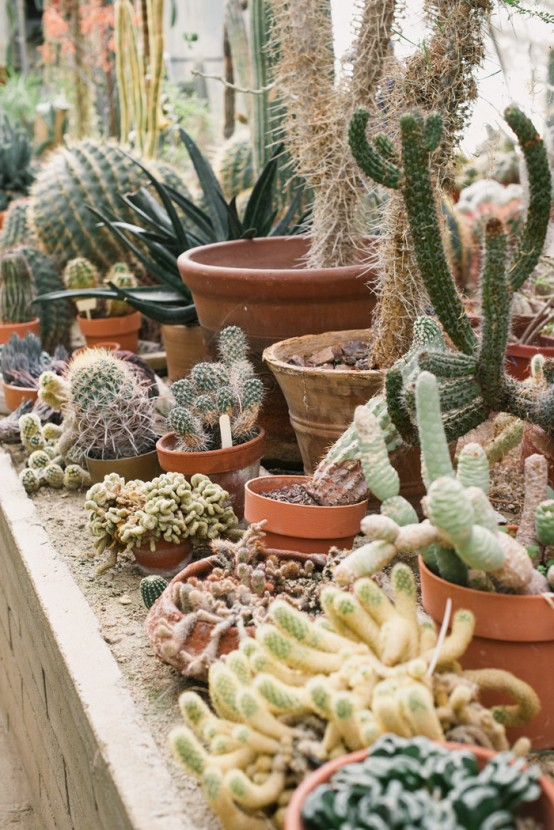 Unusual Green Room With Lots Of Cacti And Succulents