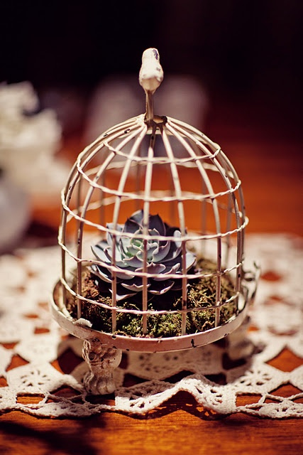 A small bird cage is a perfect housing for a succulent.