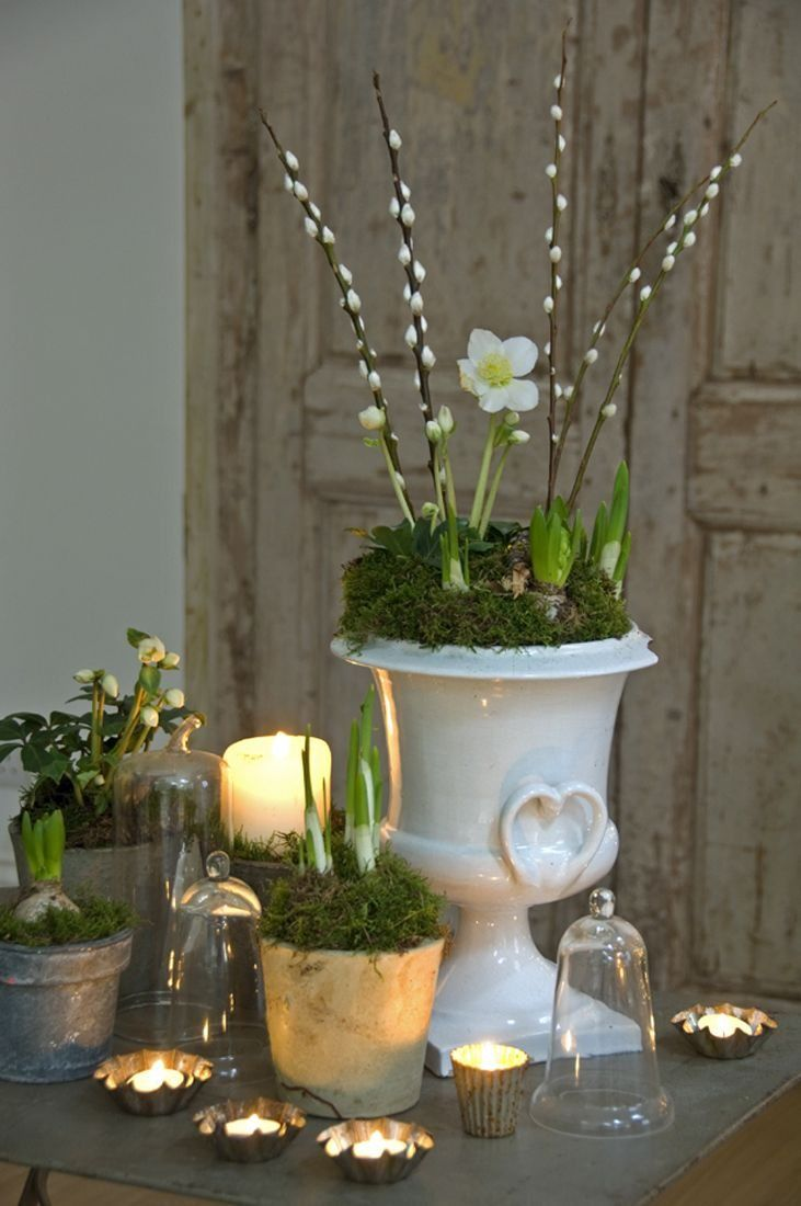 a vintage porcelain urn with moss, white bulbs and willow plus candles and more bulbs in pots as a spring or Easter centerpiece